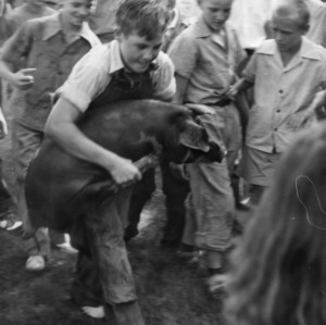 4-H club member carrying a hog