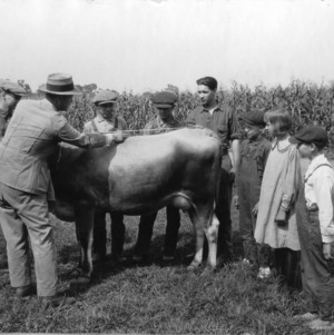 4-H club leader measuring a cow in front of club members