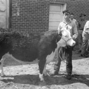 4-H club member holding a cow in Kinston, North Carolina