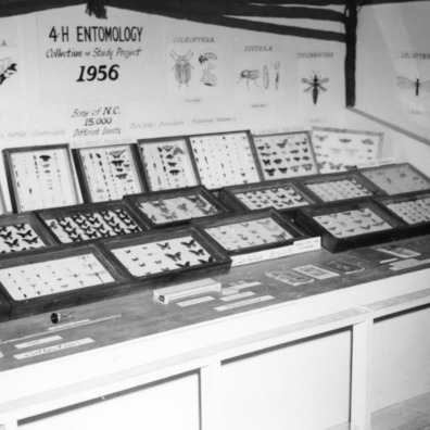 """4-H Entomology Collection Study Project, 1956"" exhibit"