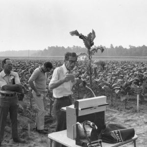 Extension professor, Furney A. Todd, lecturing in tobacco field
