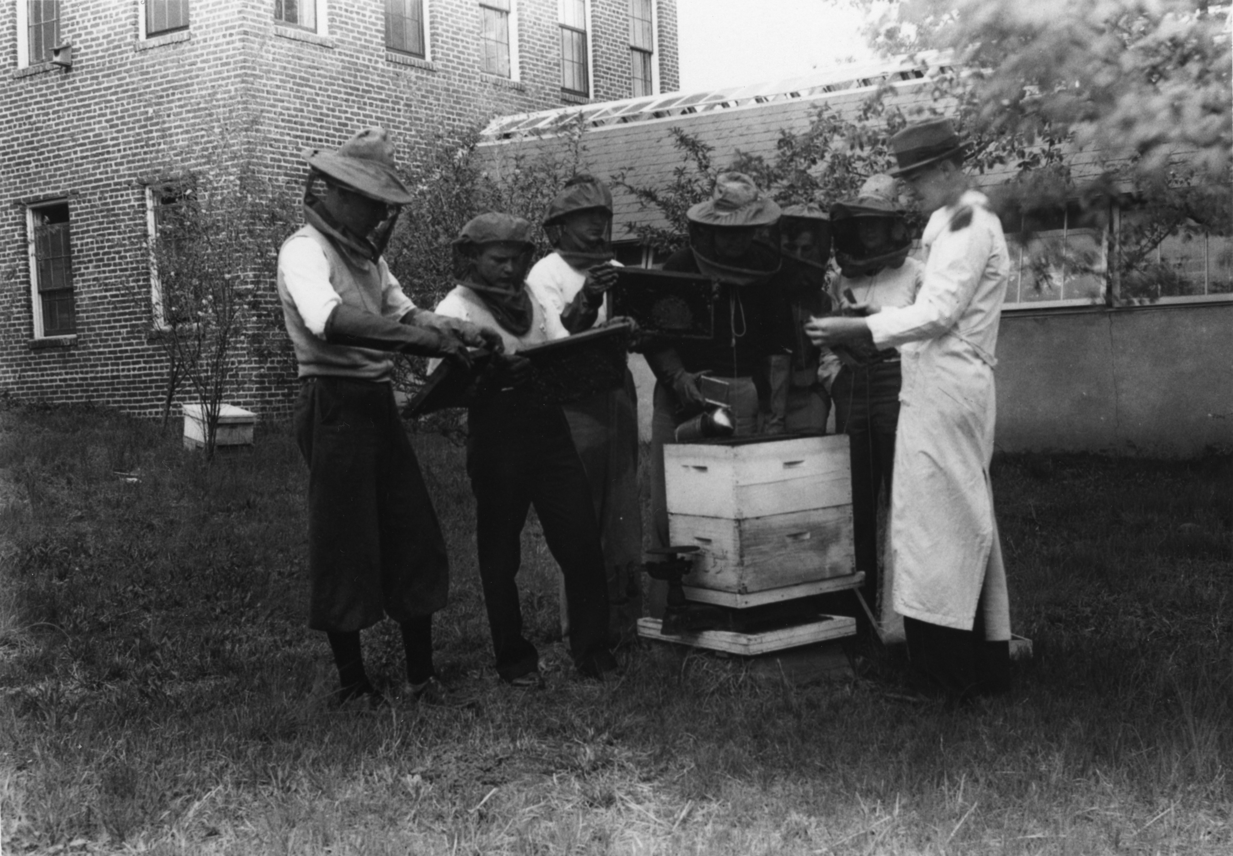 Beekeepers, probably behind Primrose Hall