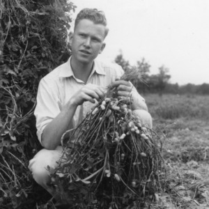 Unidentified 4-H club member holding his crop of peanuts