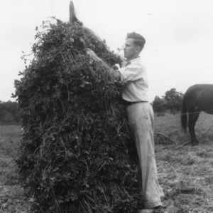 Rudolph Ellis, a 4-H club member, harvesting his peanut crop in Cumberland County, North Carolina