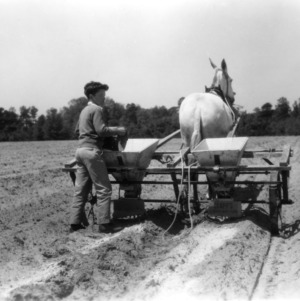 Unidentified boy working in a field as part of a 4-H club peanut project in Chowan County, North Carolina