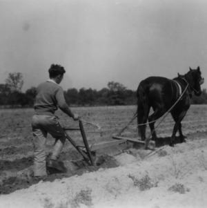 Unidentified man plowing his field as a part of a 4-H club peanut project in Chowan County, North Carolina