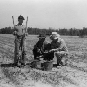 Two unidentified men and a boy plant a peanut crop as part of a 4-H club peanut project in Chowan County, North Carolina