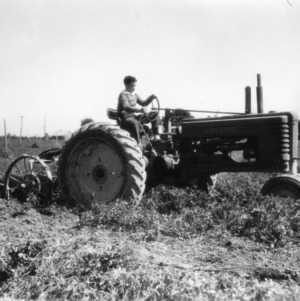 Unidentified boy working in a peanut field as part of a 4-H club peanut project in Chowan County, North Carolina