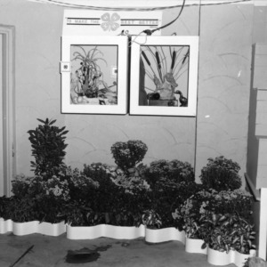 4-H club plant exhibit at North Carolina State Fair, 1959