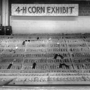 4-H club corn exhibit
