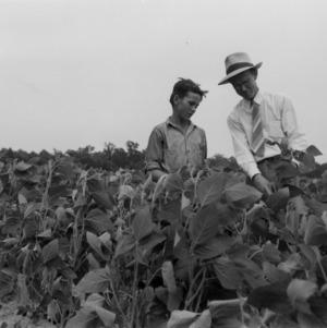Inspecting crops, Nash County, North Carolina, 1942