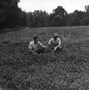 Agent and 4-H club boy examining crops