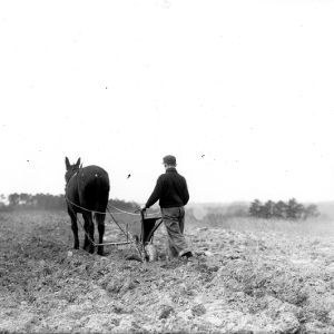 4-H club boy seeding field in North Carolina with horse-drawn seeder