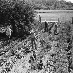 Young people working in garden, Wilson County, North Carolina, 1941