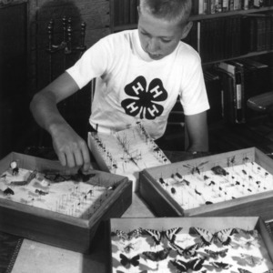 4-H club member exhibiting his insect collection as part of the 4-H collections program
