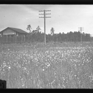A field of white orchids at Big Savannah Depot