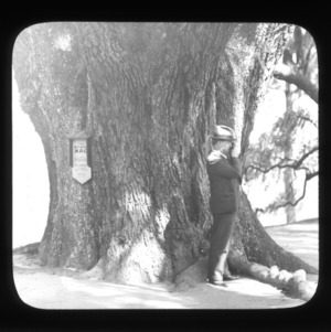 Dr. Zeno P. Metcalf in front of the Middleton Oak