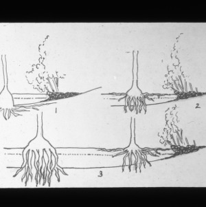 A diagram of tree stumps at White Lake, North Carolina