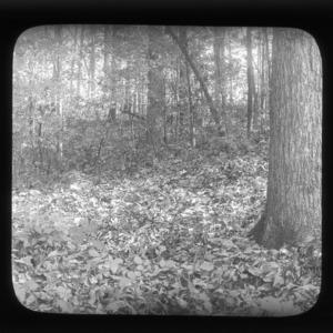 Deciduous forest floor