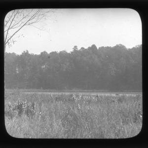 Oak-hickory forest at Lake Raleigh, North Carolina State University