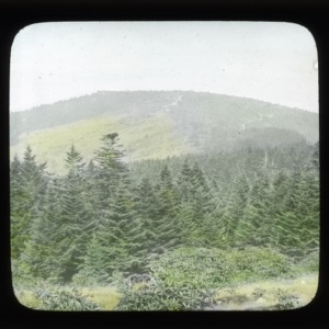 Christmas tree land: A glimpse of Canada in North Carolina, viewed from Roan Mountain