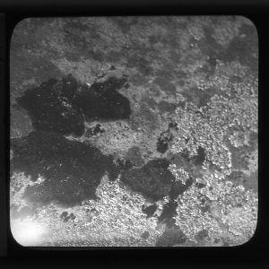 Lichen and moss association at Lake Raleigh, North Carolina State University