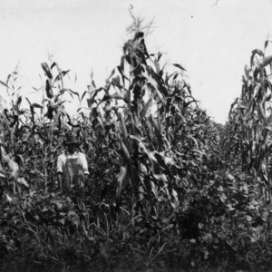 Farmer standing in corn field with heavy growth of soybeans between rows