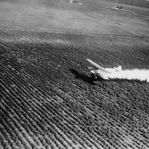 Airplane flying low over cotton field leaving a trail of dust, November 25, 1925