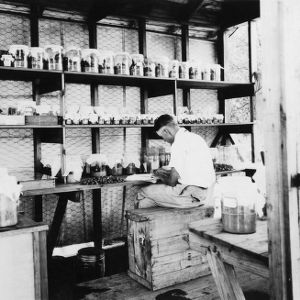 Boll weevil field laboratory, Aberdeen, North Carolina