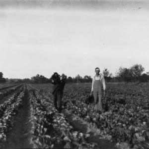 Two men in a field