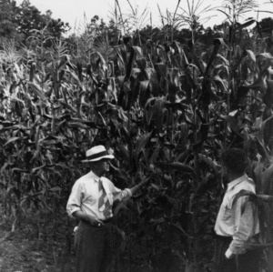 I. O. Schaub and other in corn field