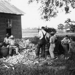 Families shucking corn