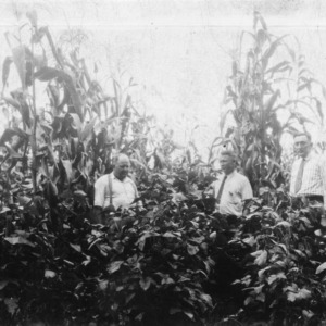 Corn and soybeans planted together, 1932