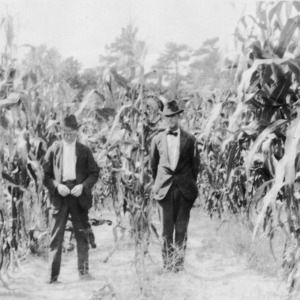 Corn after vetch, October 1920