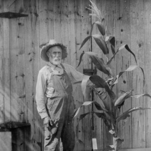James Monroe Jarvis with a sample stalk of the Jarvis yellow corn, which he originated, August 18, 1926