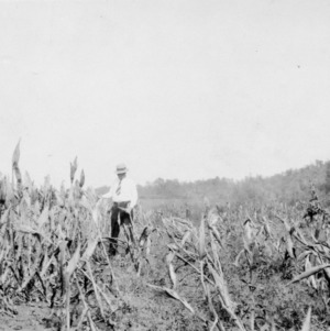 Corn demonstration, November 19, 1930. This picture, taken in Cherokee County, shows R. W. Gray, county agent, standing between two plots of corn