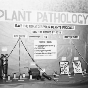 Plant pathology department's exhibit on tomatoes, Agusut 1946