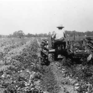 Tractor digging up potatoes on farm in North Carolina