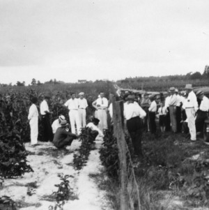 Farmers on tour examining corn and velvet beans on Johnston County home crop rotation tour, Smithfield, North Carolina, August 19, 1932