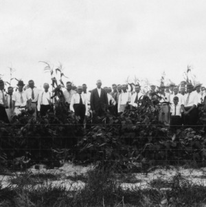 Farmers on tour examining corn and velvet beans on Johnston County home farm crop rotation, Smithfield, North Carolina, August 19, 1932