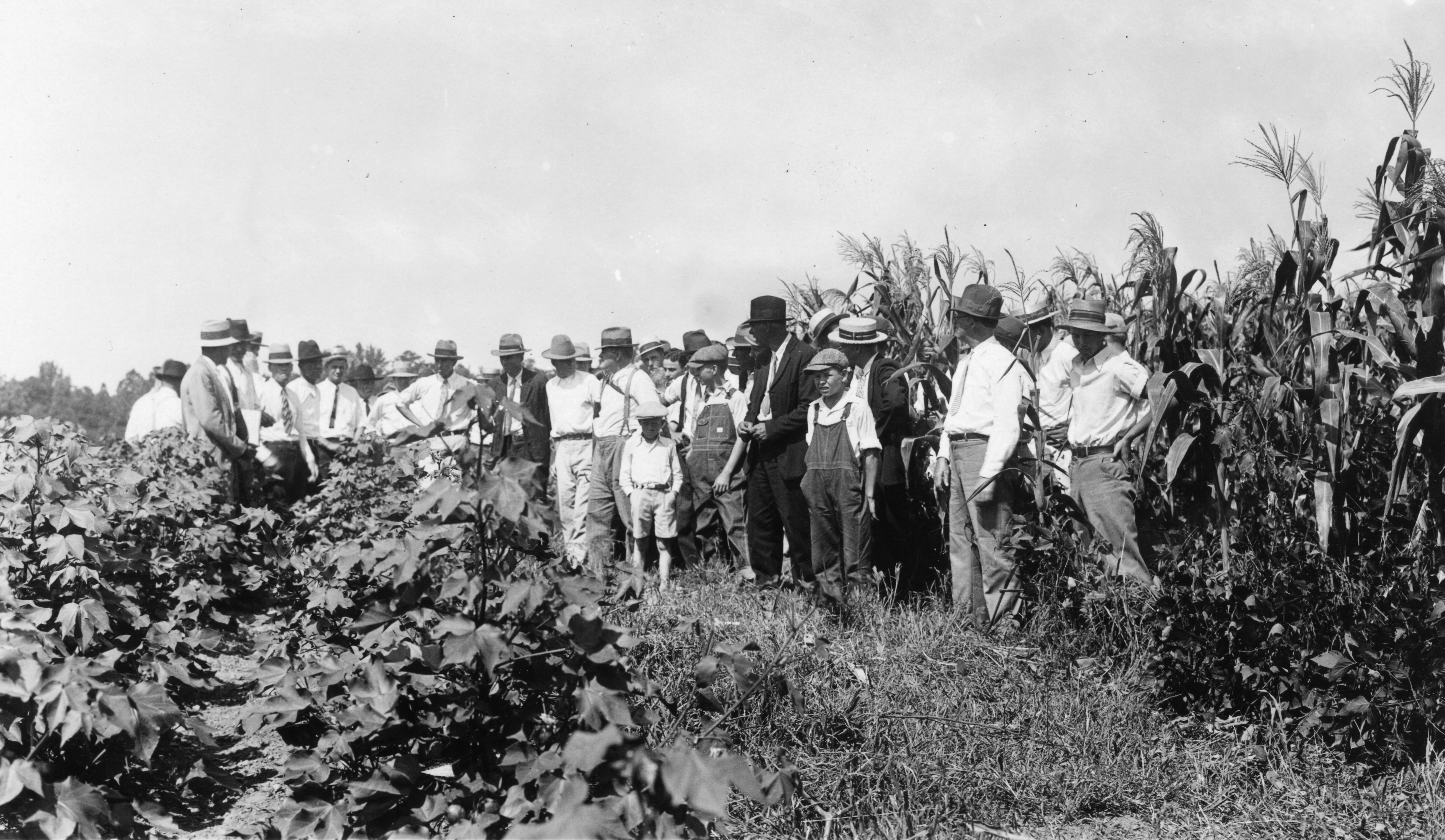 Members of the Stanly County farm tour examining corn, soybeans, and cotton in rotation, Norwood, North Carolina, November 2, 1932