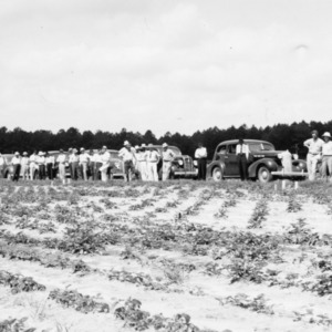Pender County farm tour visits strawberry tests at Willard farm, August 17, 1937