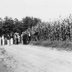 African American farmers inspecting Pamunkey silage corn on tour