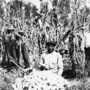 John Johnson, R-1, Scotland Neck, North Carolina, kneeling over the measured corn. He produced 68.5 bushels on the acre of corn st[ands?] in the background, November 8, 1939