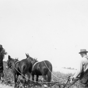 Digging potatoes with new potato digger on the farm of Allie Clay, 1940[?]