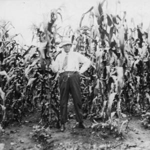 Experimental corn on Piedmont farm, Statesville, North Carolina, July 29, 1918