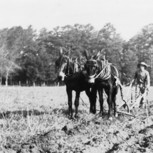 Cooperating with the soil conservation program, turning under healthy vetch, Mecklenburg County, North Carolina, April 1, 1937