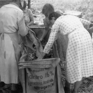 Women and children removing tobacco leaves from a bag to prepare for curing