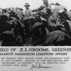 Tobacco field of Z. L. Groome, Greensboro, N.C. Mascot magnesium limestone applied