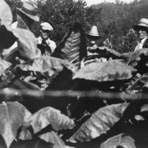 Mr. and Mrs. Otis Changler in their splendid field of tobacco, where they used 12-4-6 at the rate of 1000# per acre, August 20, 1928